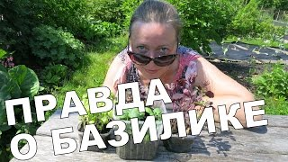 ПРАВДА О БАЗИЛИКЕ 🌿 Truth about basil / English subtitles
