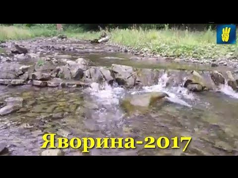 """Яворина-2017: відеозамальовка від Київської """"Свободи"""""""