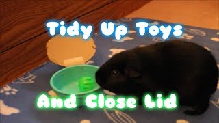 10 Second Guinea Pig Trick: Tidy Up Toys and Close Lid