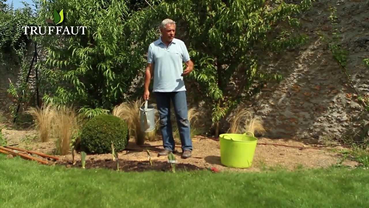 Comment et quand planter des iris jardinerie truffaut tv - Quand planter des framboisiers ...