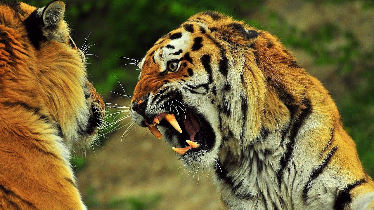 Amazoncom Animal Face Off Season 1 Inc Discovery