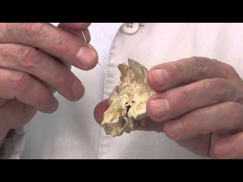 Каналы височной кости