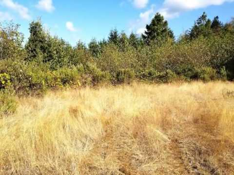 Homes for Sale - JERRY'S FLAT GOLD BEACH OR 97444 - Laura Middleton