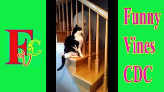 Funny Cats and Dogs Compilation New video 2018