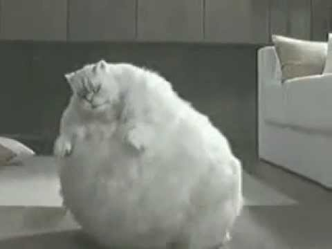 Fat Cat Dancing