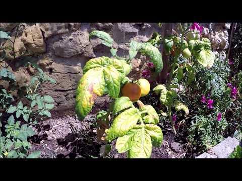 Garten Vlog # 10 Ein Update zu meinem Gemüse