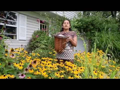 Vidya Nahar's Rice Bucket Challenge...