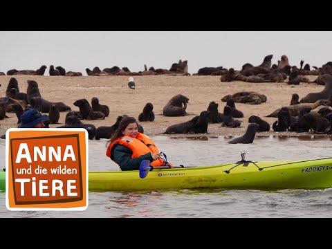 Wie robben Seebären? (Doku) | Reportage für Kinder | Anna und die wilden Tiere