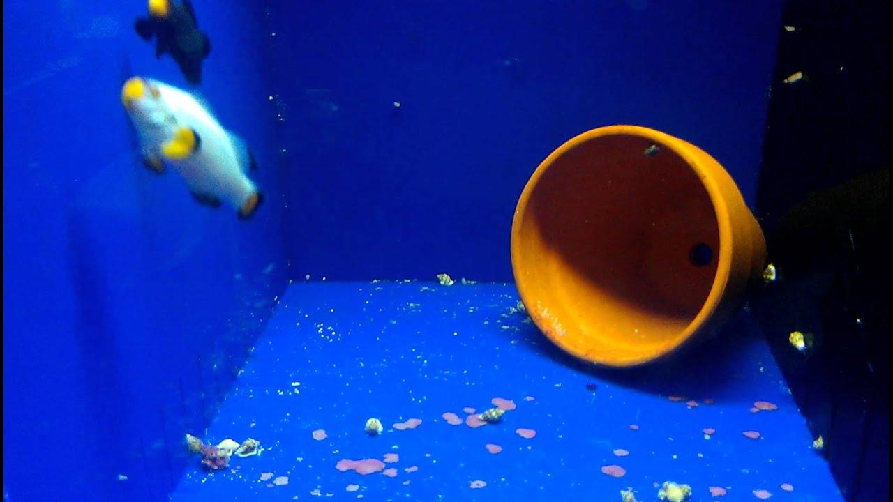 Clownfish - скачать на русском для скайпа (клоунфиш) для изменения 40
