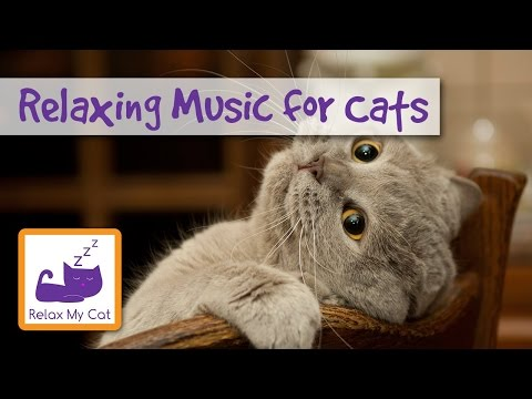 1 hour of relaxing music for cats