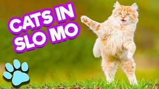 Funny Cats playing with Slow Motion! Indian cat! बिल्ली! Mdev World!