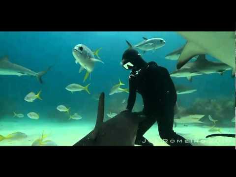 Killer Sharks (Malagueña Salerosa) AMAZING سمك القرش القاتل