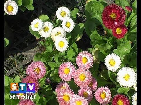 Χίλια λουλούδια στο κέντρο της πόλης