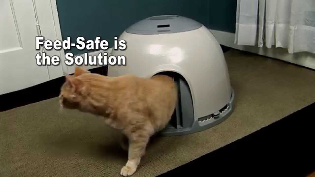 Pet Safe Feeding Station For Cats Small Dogs Youtube