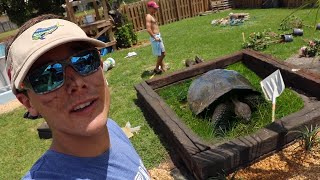 Upgrading My PET tortoise Home (she's MASSIVE)