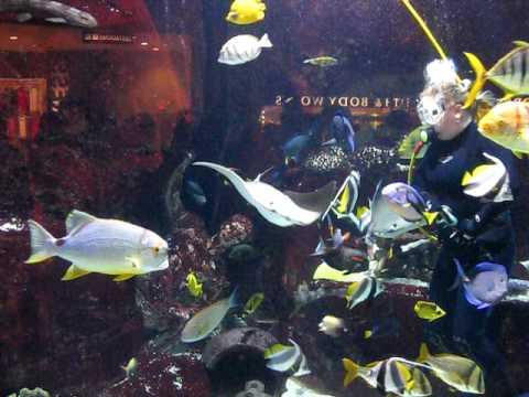Aquarium Feeding, Caesar's Palace, Las Vegas