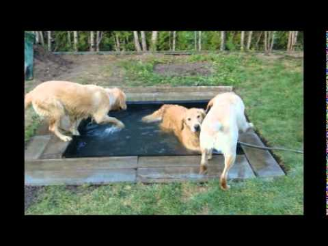 Dogs pool wellness centre youtube for Garden pool for dogs
