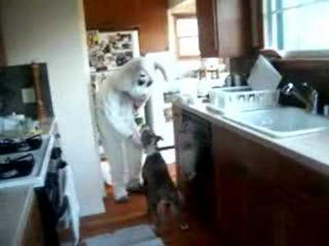 the Easter Bunny visits a happy pit bull