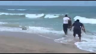 Cocodrilo en playa Miramar de Tampico