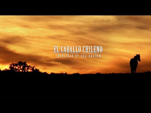 Caballo chileno    Chilean Horse  the best of America
