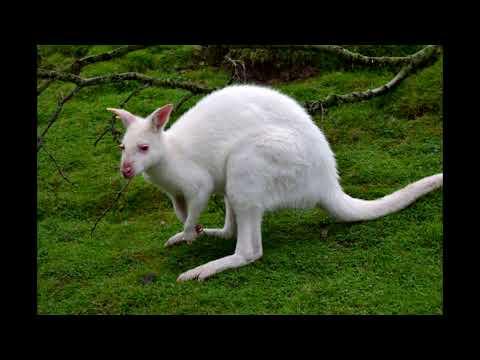 Increíbles animales albinos!