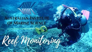 Scuba Diving the Great Barrier Reef with AIMS