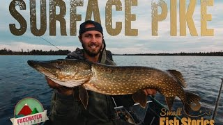 Surface Pike - Small Fish Stories