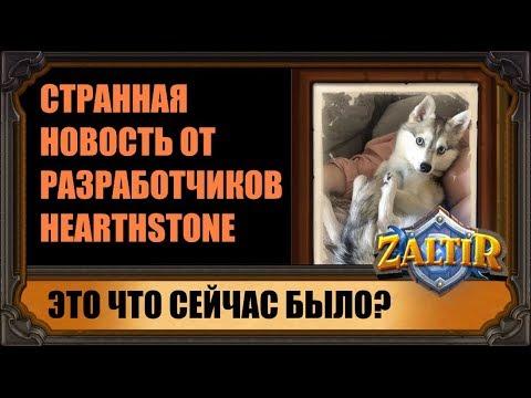 СТРАННАЯ НОВОСТЬ ПРО ЩЕНОЧКОВ ОТ РАЗРАБОТЧИКОВ HEARTHSTONE