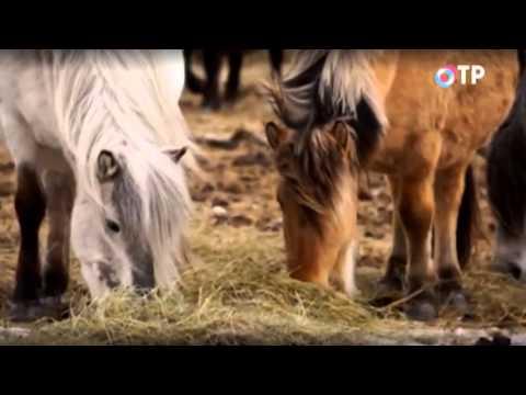 Моя Якутия  Эфир телеканала ОТР от 25 ноябра 2014 года