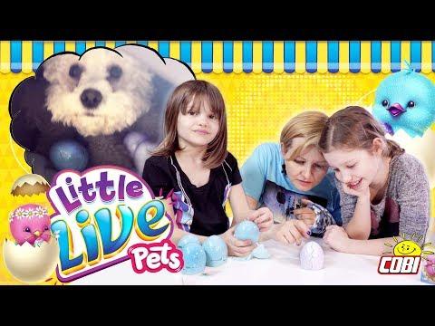 Kurczaczaki Little Live Pets Od COBI  | Dziwny Sen Amelki