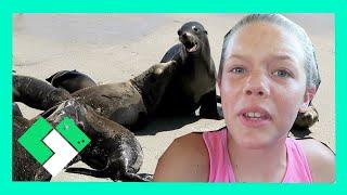 download lagu Kids Explore Seal Beach Day 1539 gratis