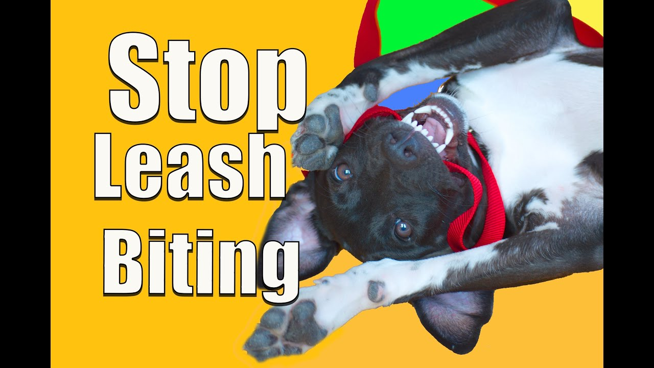 Dog Training Youtube Biting