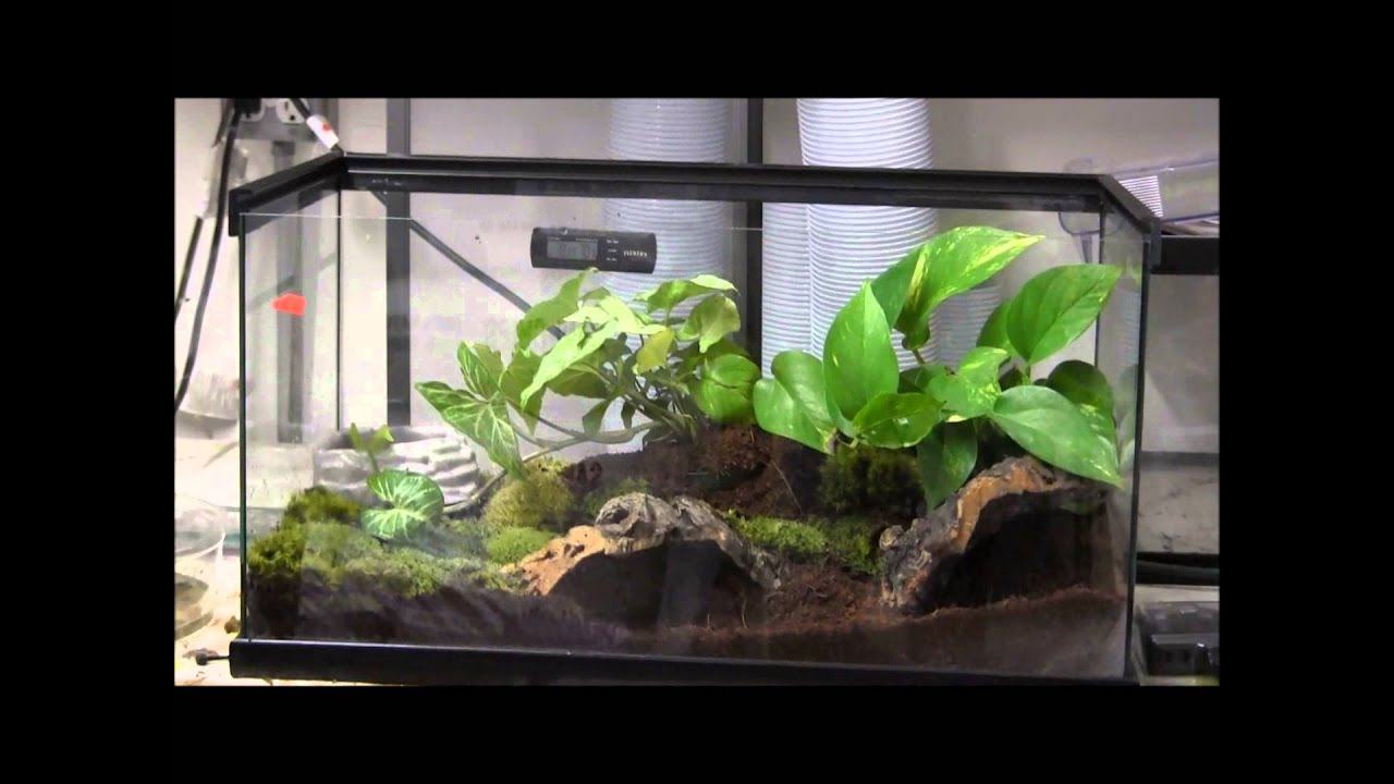 How To Set Up A Tomato Frog Youtube