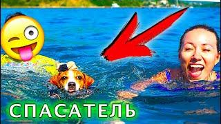 Собака Джина СПАСАТЕЛЬ ПЛАВАЕТ В ЖИЛЕТЕ ПЕРВЫЙ РАЗ Яхта Элли Ди   Elli Di Pets