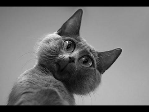 ХИТ:) ПРИКОЛЫ с ЖИВОТНЫМИ !!! БОЛЬШАЯ Подборка◄ BEST FUNNY VIDEOS ►