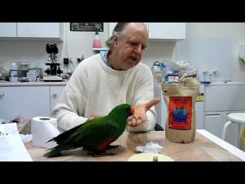 Eclectus Parrot Food Harrisons High Potency Coarse Pellets