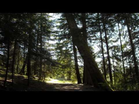 Opeth - Den Standiga Resan