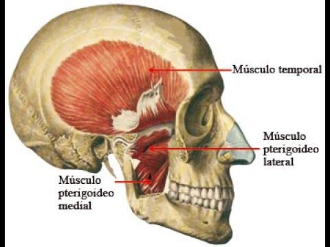 dolor en mandibula en la articulacion temporomandibular