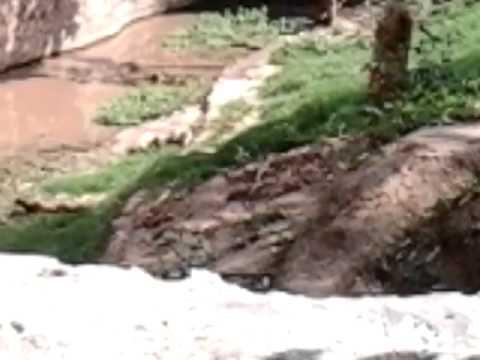 jhansi polytechnic kuldeep kumar arya civil final year 2015 /a trip in gwalior zoo Photo Image Pic