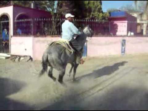 Youtube videos de caballos en venta