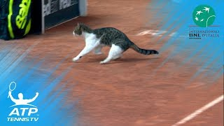 Cat invades tennis court, nearly gets hit! | Rome 2018