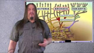 Systematic Classification of LIfe ep1 The Root of the tree
