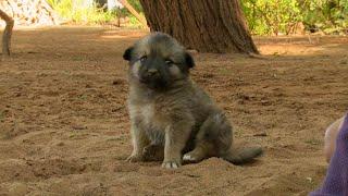 BEWARE Very Fierce Dogs - This Wild Life - BBC