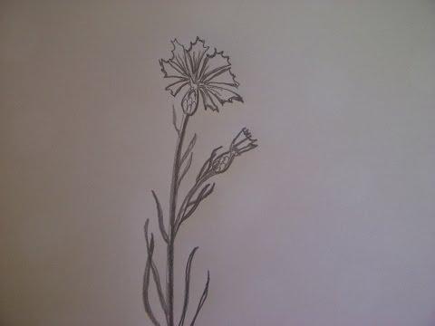 Видео как нарисовать василёк поэтапно
