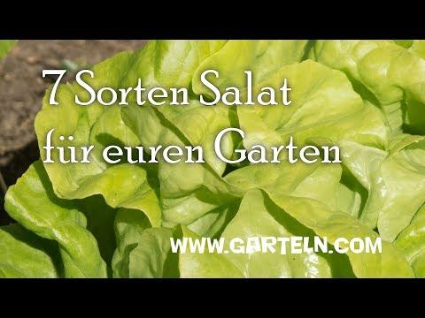 Sieben Sorten Salat für Mai und Juni für euren Garten