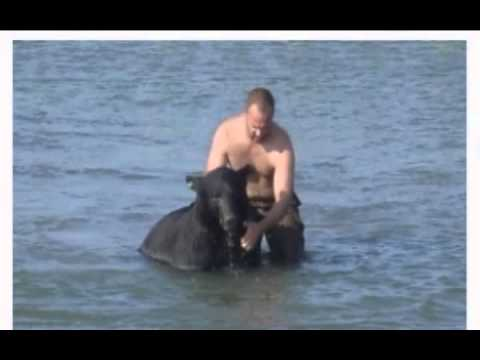 Man Saves A 375 Pound Black Bear From Drowning