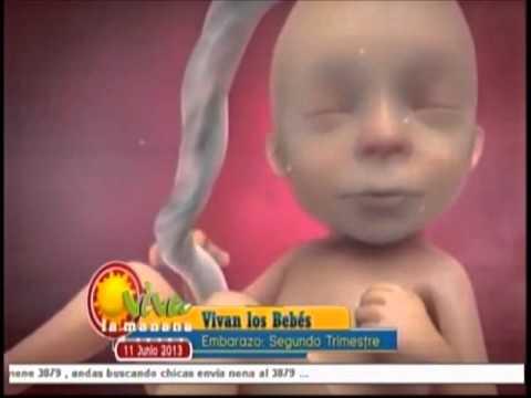 Vivan los Bebés - El segundo trimestre de embarazo. VLM 11 de Junio 2013.