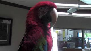 PARROT IN A CAR WASH!