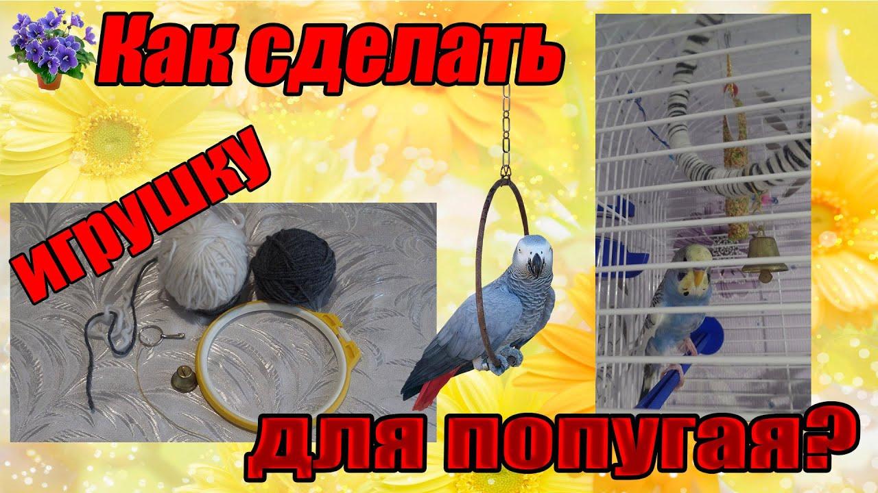 Как сделать игрушки волнистому попугаю своими руками