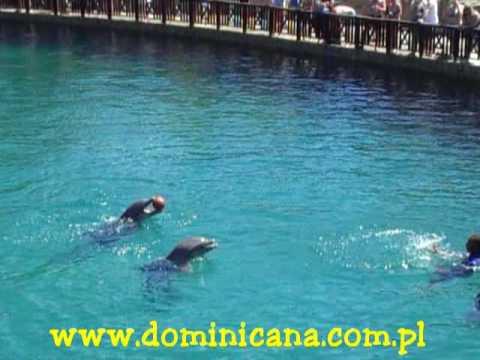 wwwdominicanacompl Ocean World Puerto Plata - Shows Dominikana